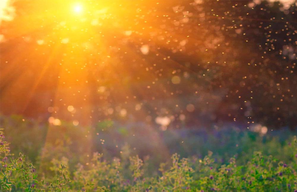 las plagas más comunes del verano